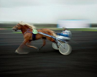 Horse Race, Vincennes Racecourse, France - p1028m767091 von Jean Marmeisse