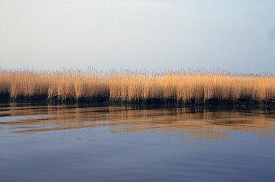 Dried reeds along the Orange River near Noordoewer in Namibia - p3490835 by Jan Baldwin
