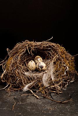 Quail eggs - p451m893549 by Anja Weber-Decker