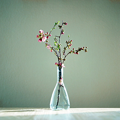 Twig in a vase - p5450068 by Ulf Philipowski