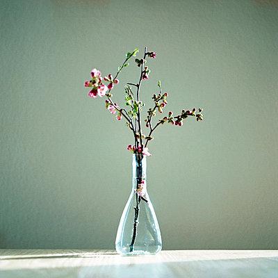 Blütenzweig - p5450068 von Ulf Philipowski
