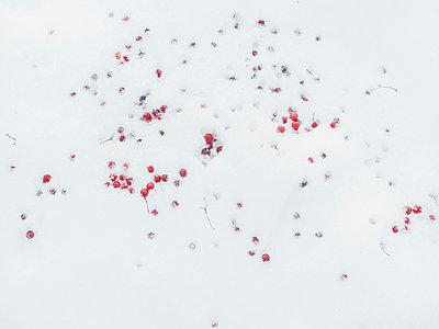 Beeren im Schnee - p1476m2026991 von Yulia Artemyeva