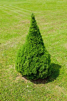 Grün - p248m912720 von BY