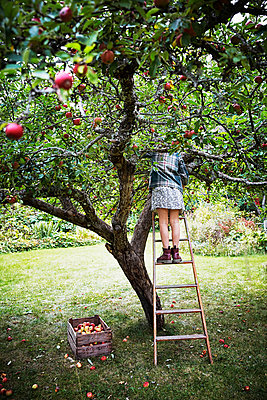 Girl picking apples - p312m2092085 by Anna Kern