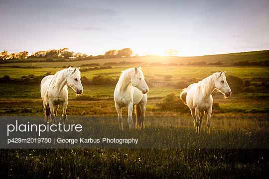 p429m2019780 von George Karbus Photography