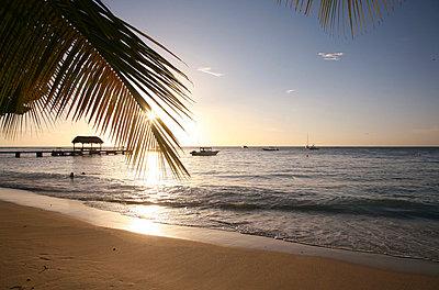 Tobago - p1130367 by Lioba Schneider