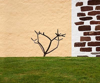 Kahler Baum auf Rasen vor zweiteiliger Mauer - p1162m1461821 von Ralf Wilken