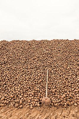 Kartoffeln - p1222m1072125 von Jérome Gerull