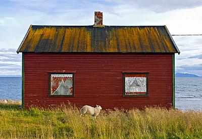 p816m745099 von Bjørn Jørgensen