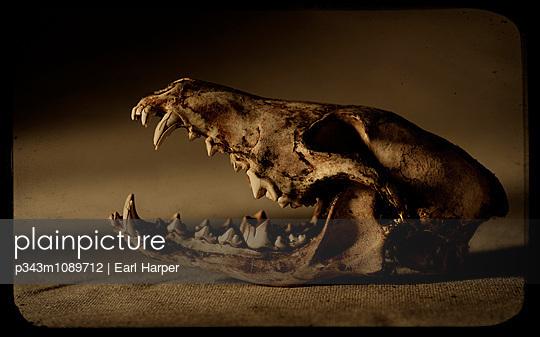 p343m1089712 von Earl Harper