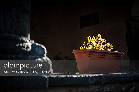 Gelbe Blumen in einem Blumenkasten aus Plastik - p1007m1216532 von Tilby Vattard