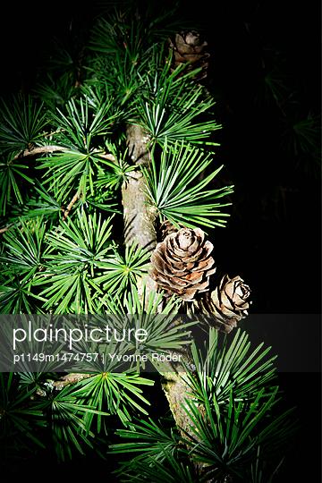 Larch - p1149m1474757 by Yvonne Röder