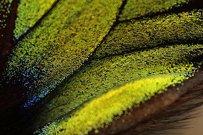 Macro Butterfly - p1054m2278054 by Maria Kazvan