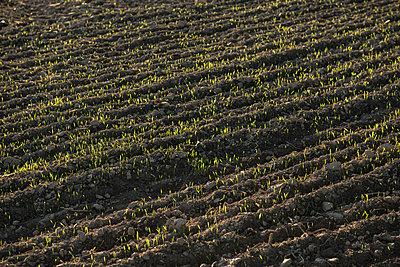 Seedlings - p1354m2285009 by Kaiser