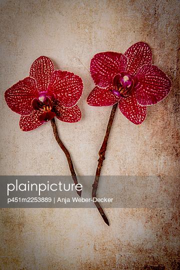 p451m2253889 by Anja Weber-Decker