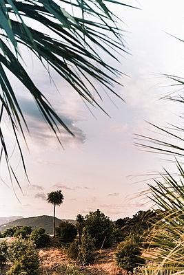 Drachenbaum auf einem Hügel  - p1255m1574981 von Kati Kalkamo