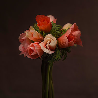 Bouquet of Pink and Salmon Anemone Flowers against Dark Background - p694m2068283 by Lori Adams