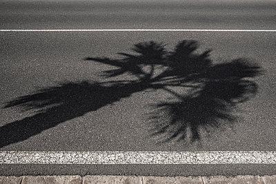 Schatten einer Palme auf schwarzem Asphalt - p1162m1516864 von Ralf Wilken