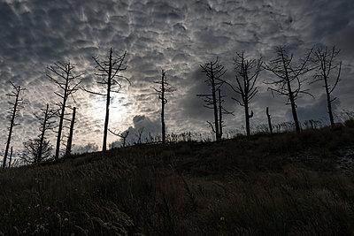 Unheimliche Wolken - p305m1171496 von Dirk Morla