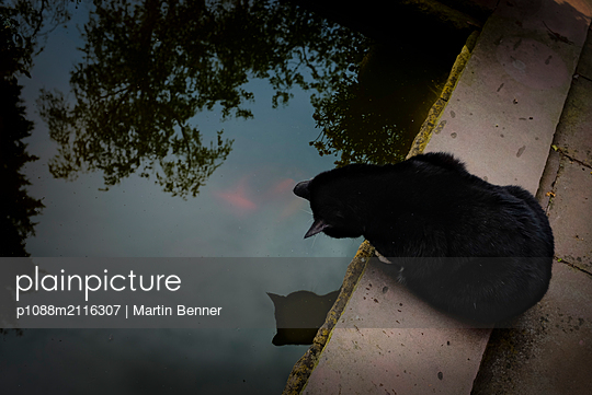 Male cat on lake - p1088m2116307 by Martin Benner