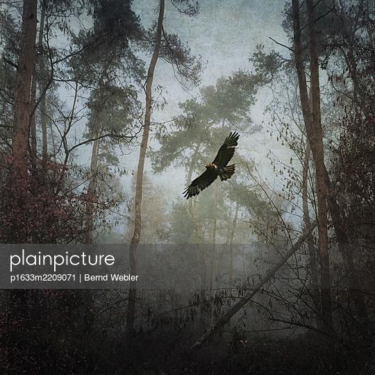 Through the Woods - p1633m2209071 by Bernd Webler