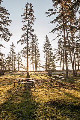 morning sun filters through trees at picnic area, Acadia National Park - p1166m2192056 by Cavan Images