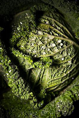 Wirsing - p1338m1181715 von Birgit Kaulfuss