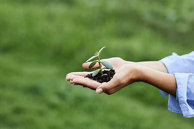 Hands holding plant and soil - p300m2199329 by MiJo