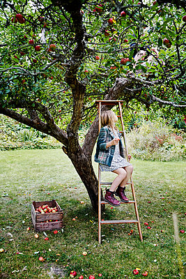 Girl picking apples - p312m2092043 by Anna Kern