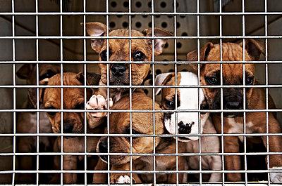 Puppy-dogs - p851m865060 by Lohfink