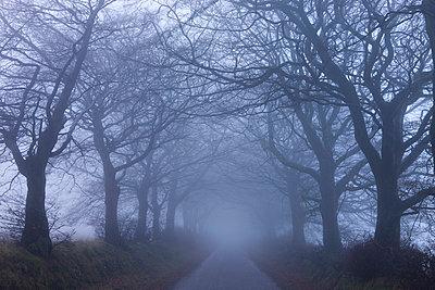 Foggy winter morning along a tree lined lane near Northmoor Common, Exmoor National Park, Somerset, England, United Kingdom, Europe - p8713011 by Adam Burton