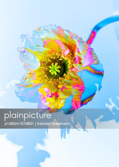 Pflanzen - p1482m1574801 von karsten lindemann