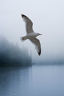 Seagull - p2481172 by BY