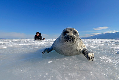 Russia, Lake Baikal, woman watching Baikal seal on frozen lake - p300m1053215f by Gerald Nowak