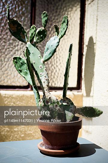 Kaktus auf dem Balkon - p1149m1147031 von Yvonne Röder
