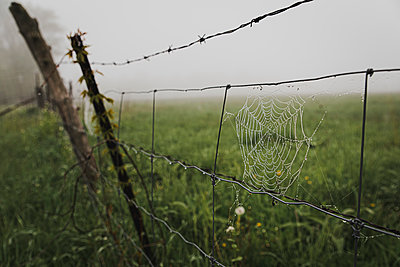 Close up of dew covered spider web on a wire fence in the fog. - p1166m2113066 by Cavan Images