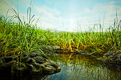 Pond and grass, close up - p429m802510 by Cultura