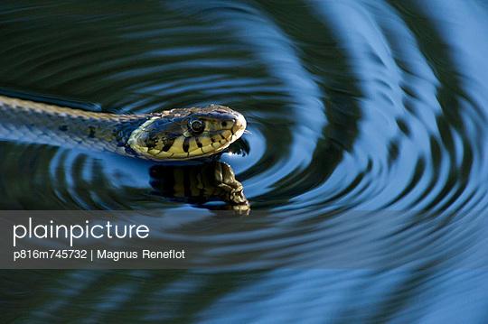 p816m745732 von Magnus Reneflot
