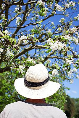 Cherry tree branch - p045m1154716 by Jasmin Sander