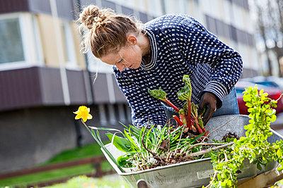 Woman gardening - p312m1499044 by Sara Winsnes