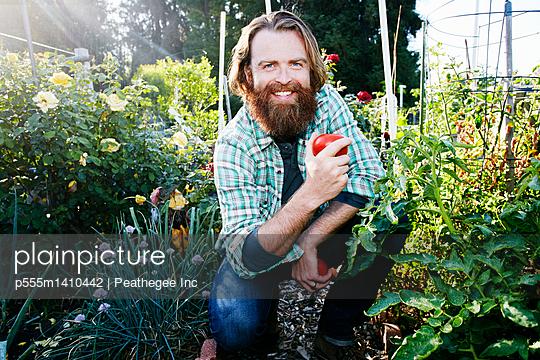 Caucasian man picking vegetables in garden - p555m1410442 by Peathegee Inc