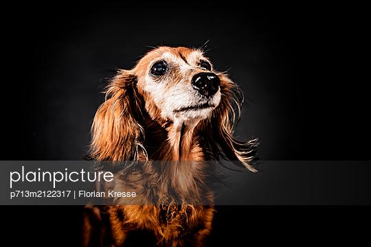 p713m2122317 by Florian Kresse