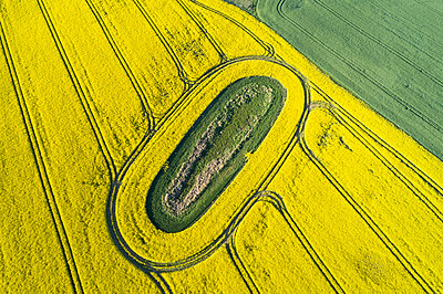 Germany, Mecklenburg-WesternPomerania, Aerial view of vast rapeseed field with green oval inside - p300m2144383 by Martin Rügner