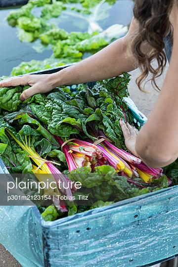 Woman harvesting fresh rainbow chard - p301m2123154 by Tobias Titz