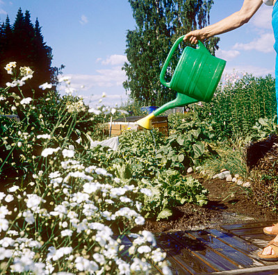 Watering the flowers - p3225843 by Sari Poijärvi