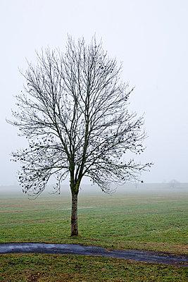 Nebel - p570m866210 von Elke Röbken