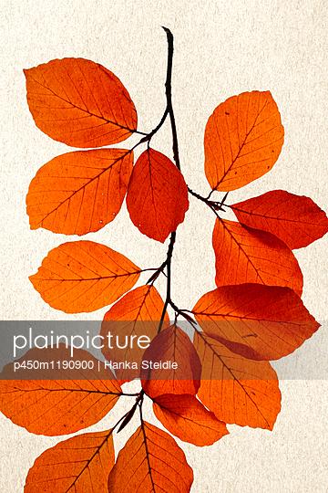 Herbstlaub    - p450m1190900 von Hanka Steidle