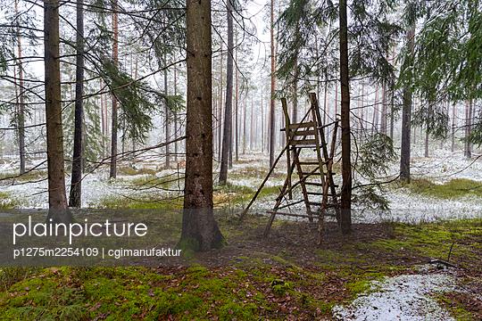 Forest in winter - p1275m2254109 by cgimanufaktur
