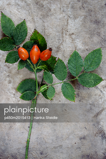 Rosehips - p450m2015413 by Hanka Steidle
