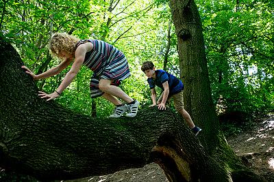 Junge und Mädchen klettern auf einem Baumstamm - p1212m1152981 von harry + lidy